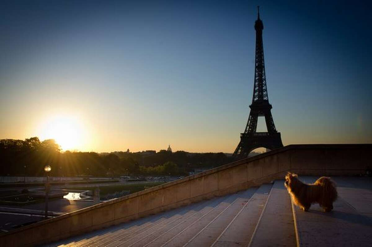 A dog is pictured as the sun rises on the Eiffel tower, on September 21, 2010, in Paris.