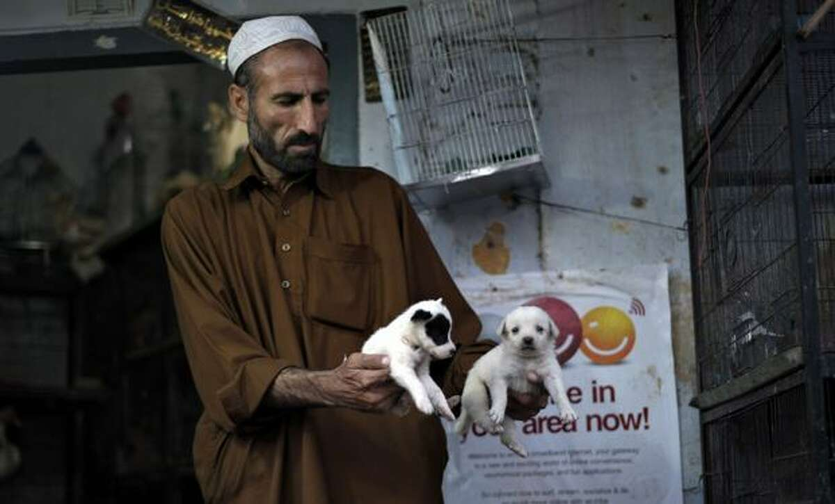 A shopkeeper holds puppies for sale at a pet shop on October 1, 2010 in Rawalpindi, Pakistan.