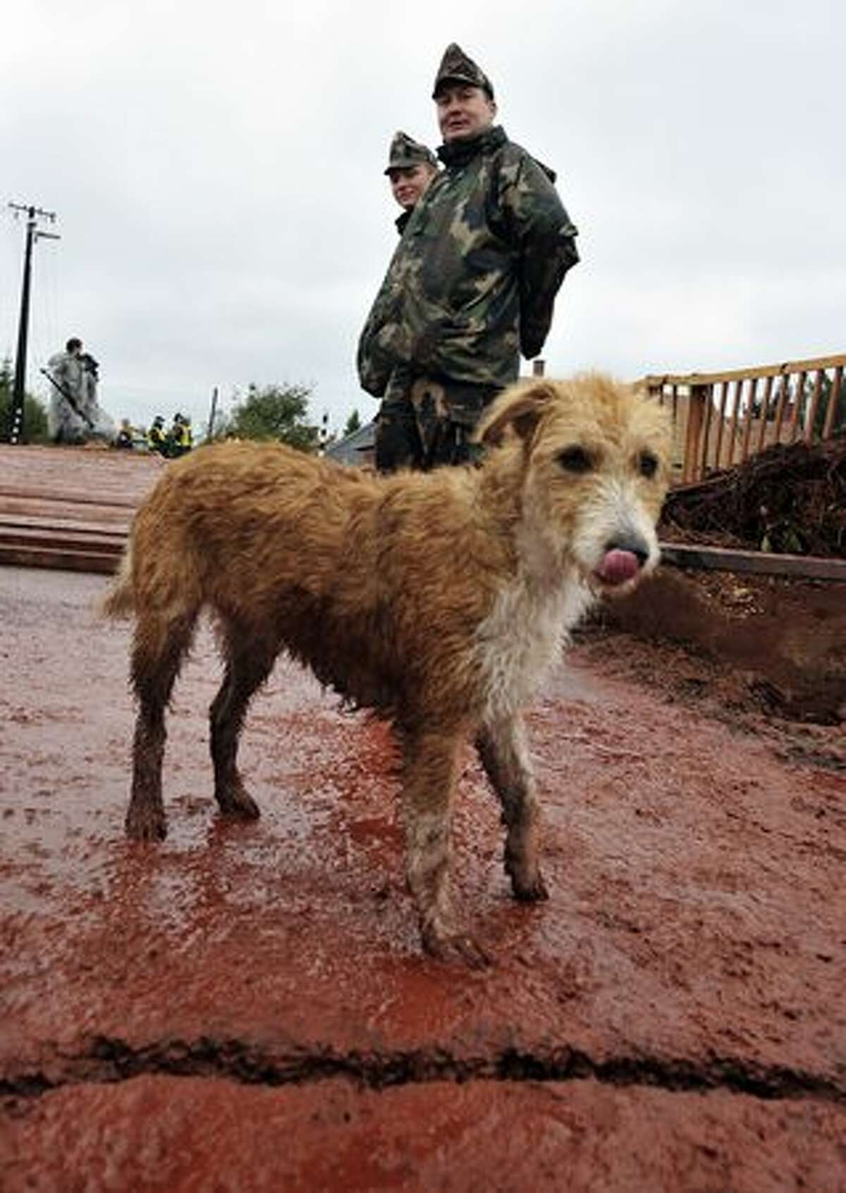 A dog walks off a bridge in Kolontar, Hungary, on October 6, 2010, where the army had to build a temporary bridge to replace one that was swept away after a wave of toxic red mud swept through the small village, killing four and injuring scores more.