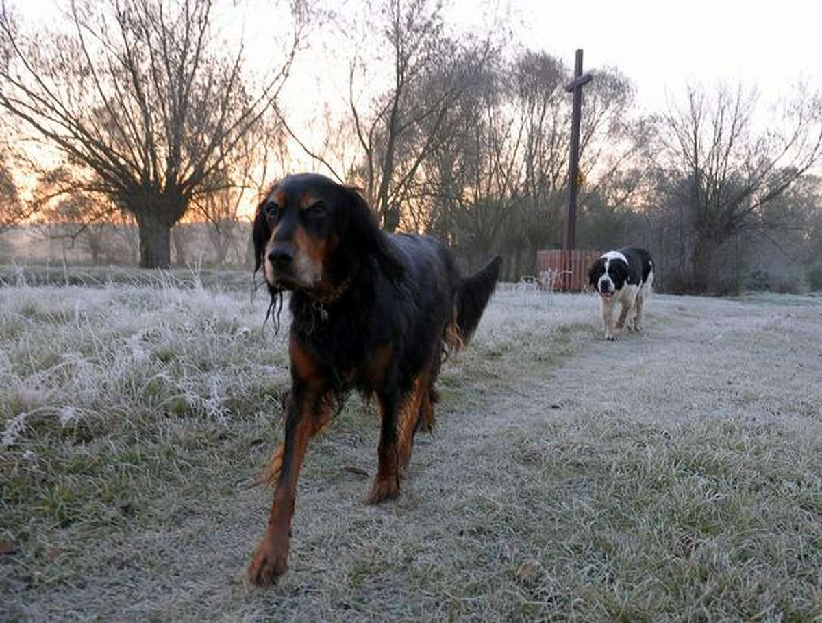 Two dogs walk in a frozen field in the countryside near Warsaw, Poland, on October 9, 2010.