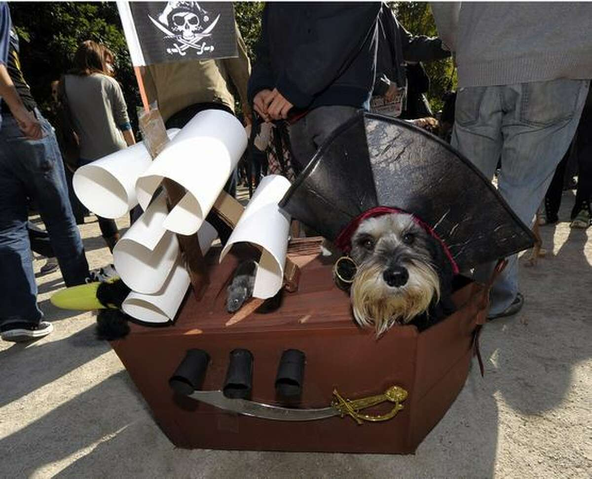 A dog dressed as a pirate ship participate sin the Tompkins Square Park 20th Annual Halloween Dog Parade October 23, 2010 in New York City.