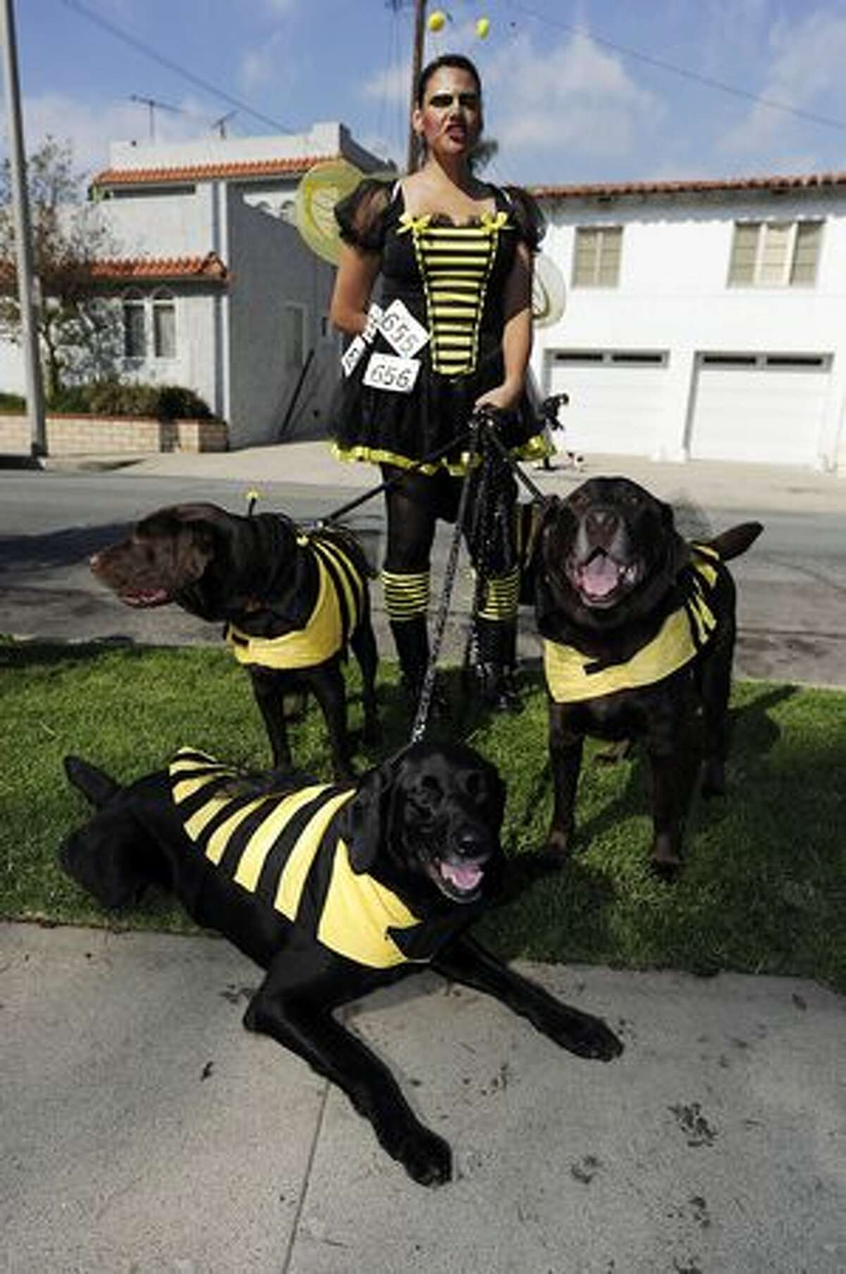 Rhonda Partida and her three Labrador retrievers are dressed as bumble bees at the Halloween Dog Costume Parade in Long Beach, California on October 31, 2010.