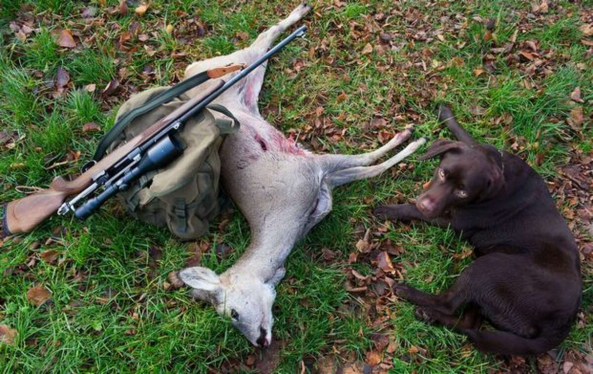 A hunter's weapon lays against a slain deer next to a dog near in the eastern German city of Sieversdorf, Germany, on November 20, 2010. The month of November is the main hunting period in the region.