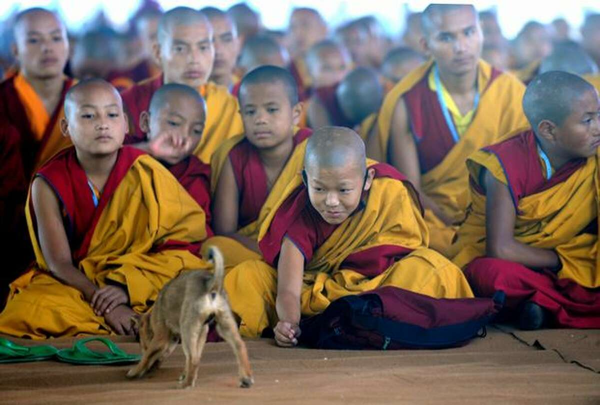 Young Tibetan Buddhist monks play with a puppy as they attend a prayer for The Karmapa 900 ceremony in Bodhgaya on December 9, 2010. Some 5,000 Buddhist monks from across the world have assembled in the eastern Indian town to take part in celebrations for Karmapa 900, a yearlong celebration to commemorate the 900th anniversary of the First Karmapa's birth.