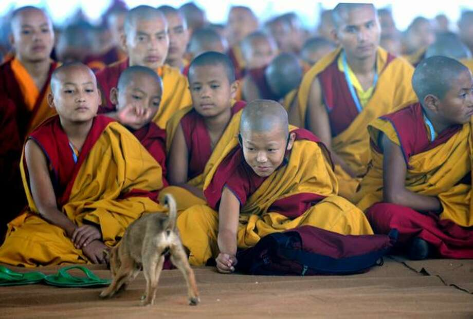 Young Tibetan Buddhist monks play with a puppy as they attend a prayer for The Karmapa 900 ceremony in Bodhgaya on December 9, 2010. Some 5,000 Buddhist monks from across the world have assembled in the eastern Indian town to take part in celebrations for Karmapa 900, a yearlong celebration to commemorate the 900th anniversary of the First Karmapa's birth. Photo: Getty Images / Getty Images