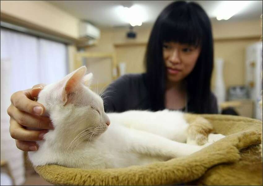 A woman strokes a cat at Nekorobi cat cafe in Tokyo, Japan.