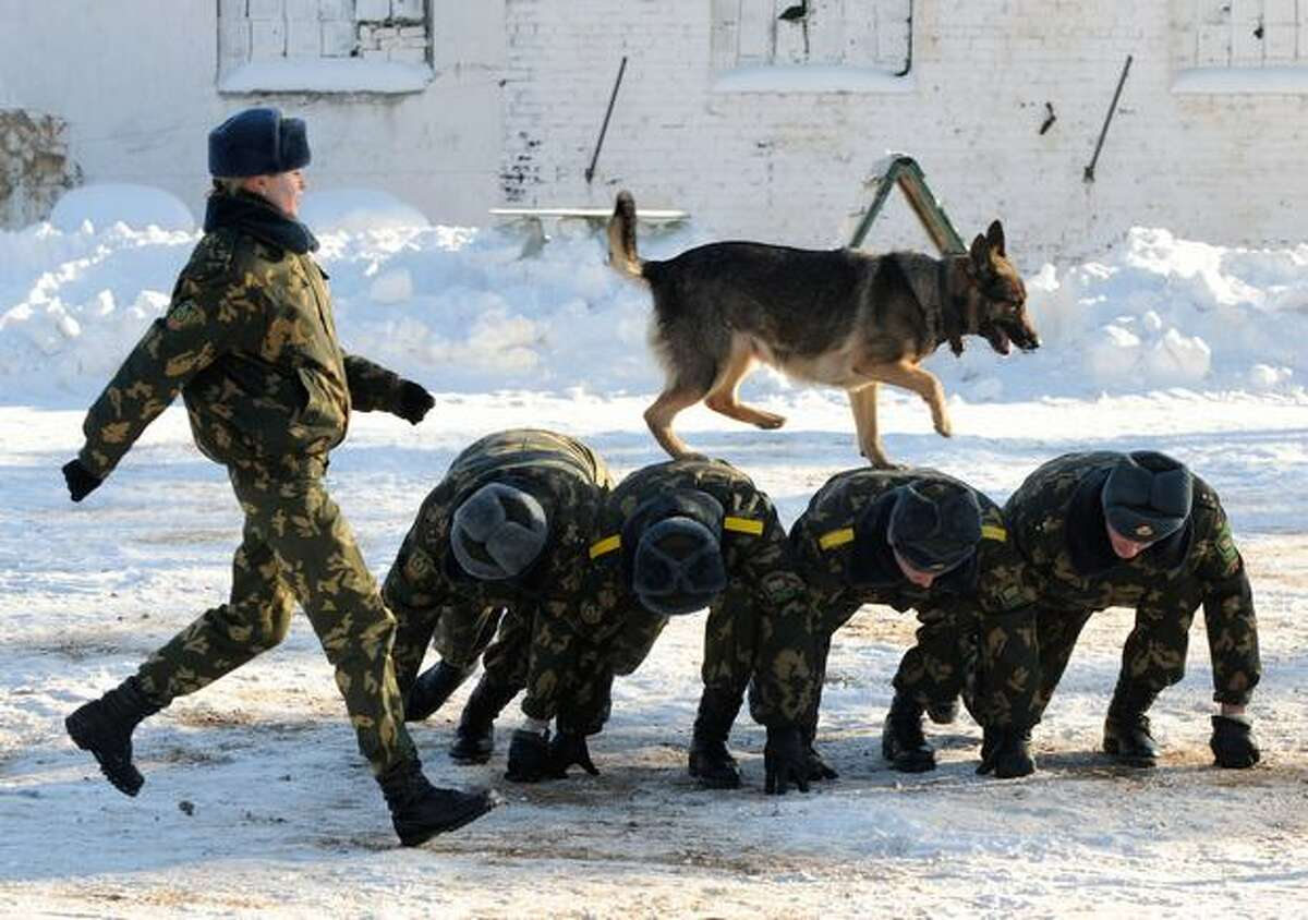 A Belarussian border guard's dog runs over the backs of soldiers at a military dog-training facility in Smorgon, about 80 miles northwest of Minsk, on January 22.