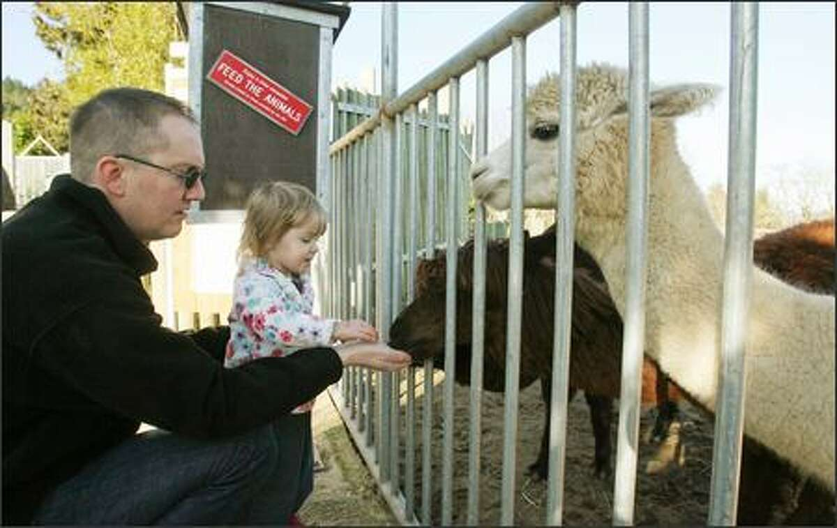 David Tracz of Snoqualmie and his daughter, Sydney, 2, feed alpacas.