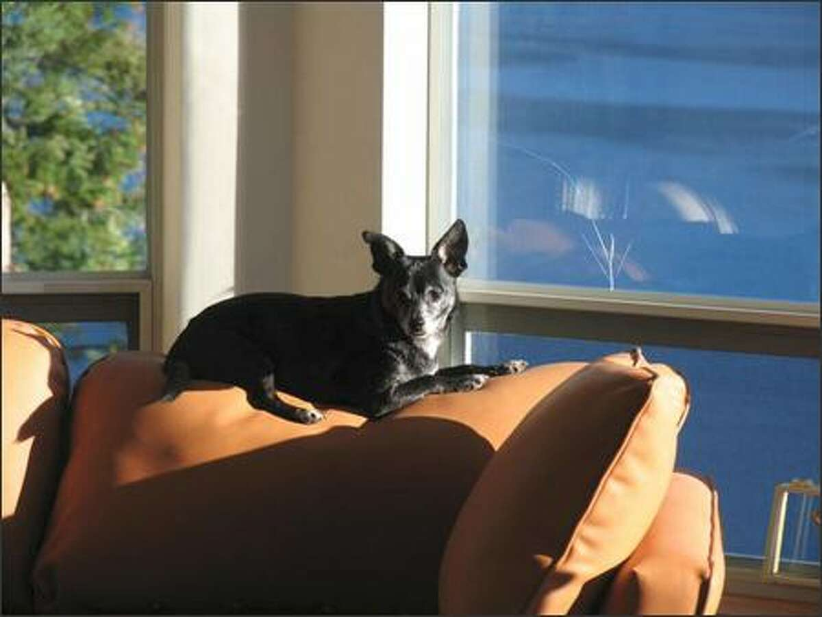 Haji, a service dog in Vancouver, B.C., catches some rays during an afternoon siesta.