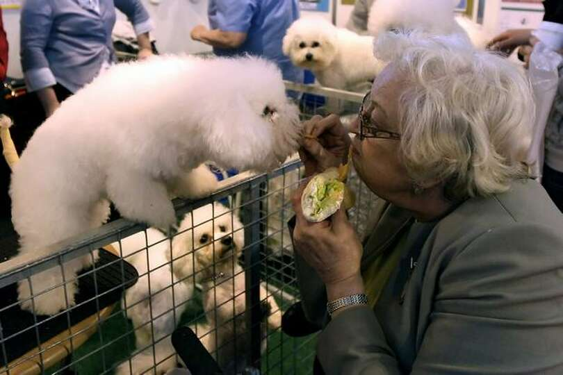 A woman feads some of her lunch to a dog while attending the annual Crufts dog show at the National