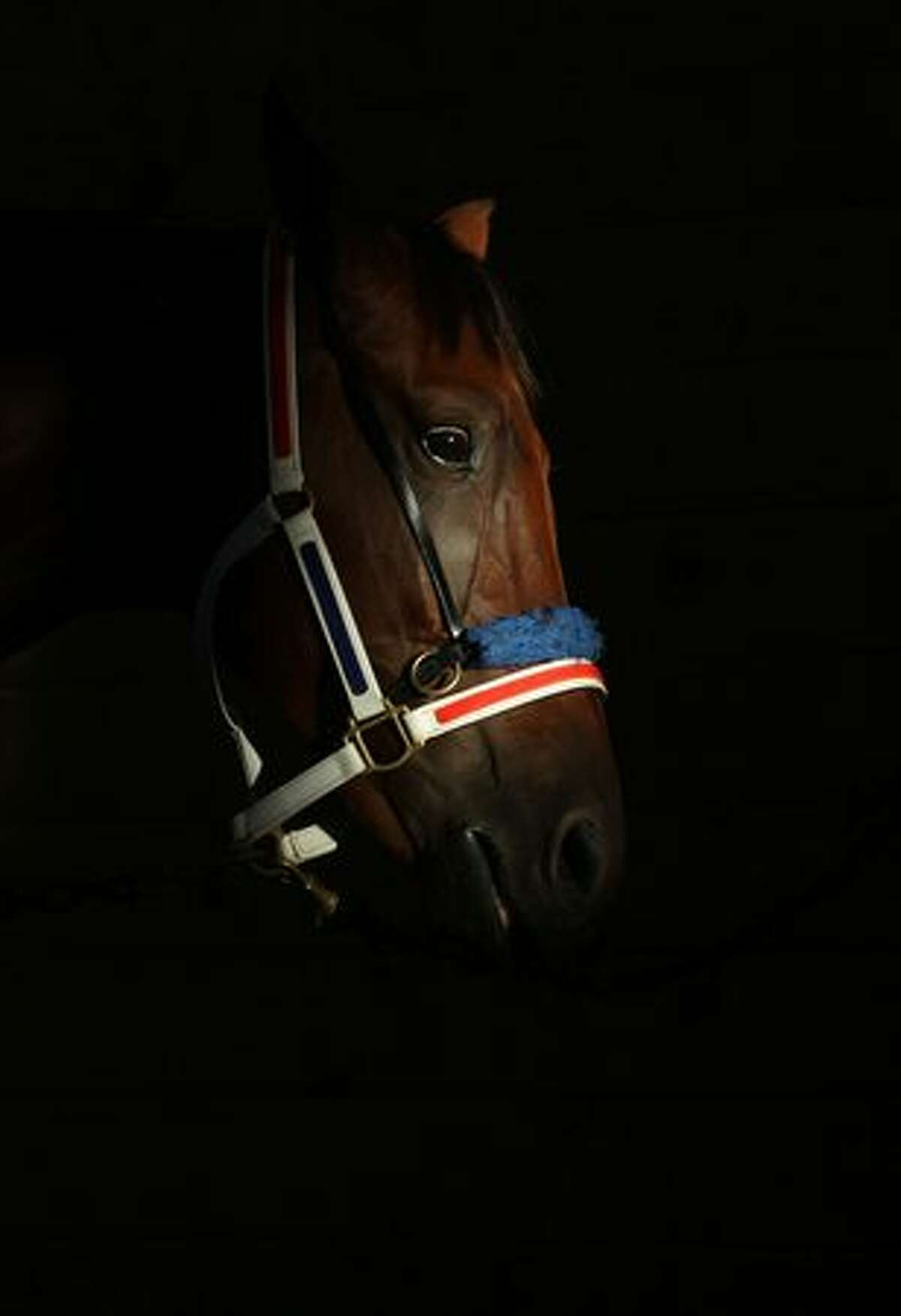 A horse waits in the stables during Auckland Trotting Cup day at Alexandra Park on March 11, 2011 in Auckland, New Zealand.