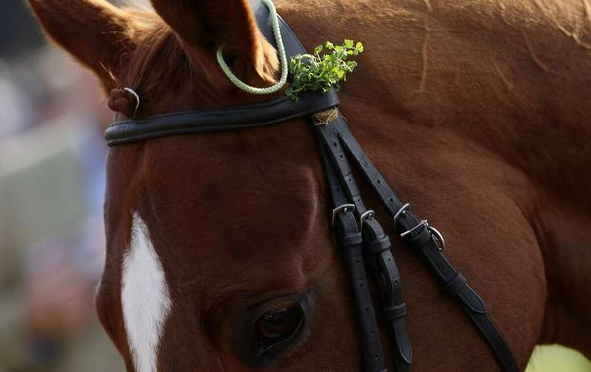 A horse wears clovers in its tack during St Patrick's Day at Cheltenham Racecourse on March 17, 2011 in Cheltenham, England. (Photo by Scott Heavey/Getty Images)