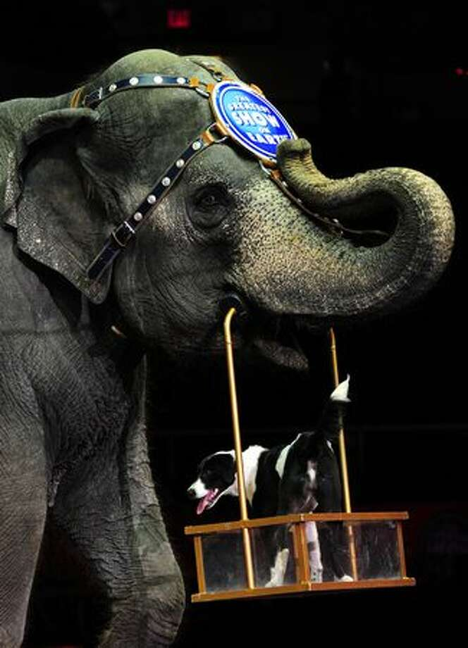 A Ringling Bros. and Barnum & Bailey circus elephant and dog perform during Barnum's FUNundrum in New York. Barnum's FUNdrum, the latest show from Ringling Bros. and Barnum & Bailey, was put together to create a 200th birthday salute to Phineas Taylor Barnum (P.T. Barnum), founder of the circus. The show, which will travel across the US in a mile-long train, presents some 130 perfomers from six continents and will be on tour for the next two years. Photo: Getty Images / Getty Images