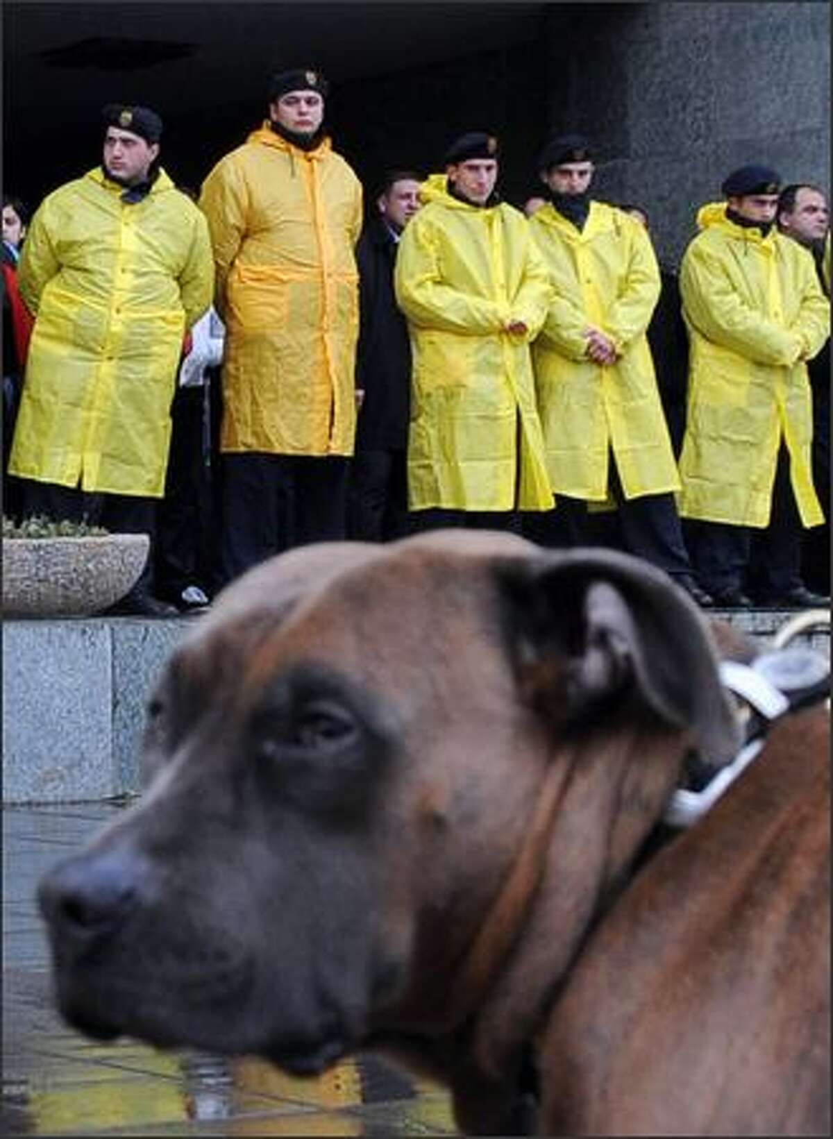 A dog is seen near policemen during a rally in front of the presidential residence in Tbilisi. Opposition demonstrations calling for President Mikheil Saakashvili to resign entered their seventh day Wednesday as the number of protesters taking part dwindled.