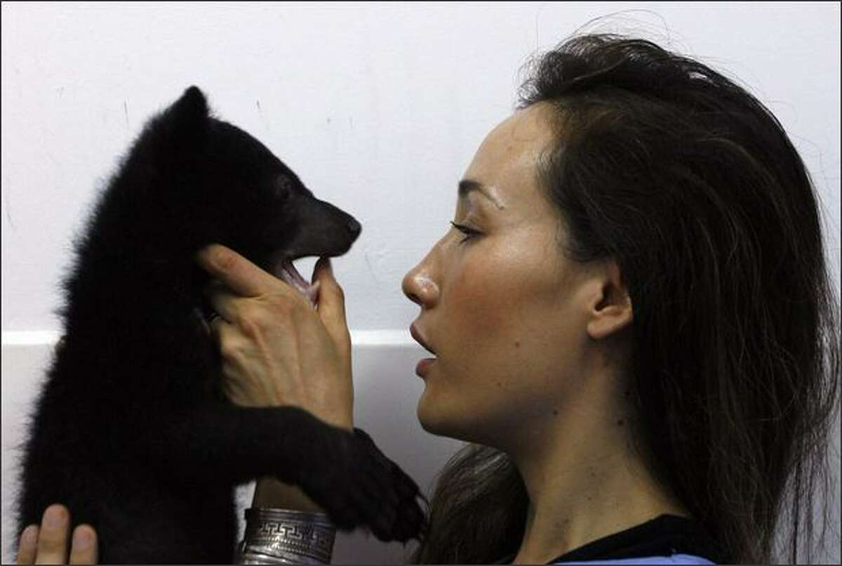 Actress Maggie Q, a goodwill ambassador for Moon Bear Rescue Vietnam, plays with an Asiatic black bear cub at the Vietnam Bear Rescue Centre in Tam Dao National Park, north of Hanoi. Tam Dao National Park director Do Dinh Tien said the new center has a role in trying to influence a cultural change in the Southeast Asian country, where wild animals are hunted and animal parts are still widely used in traditional medicines.