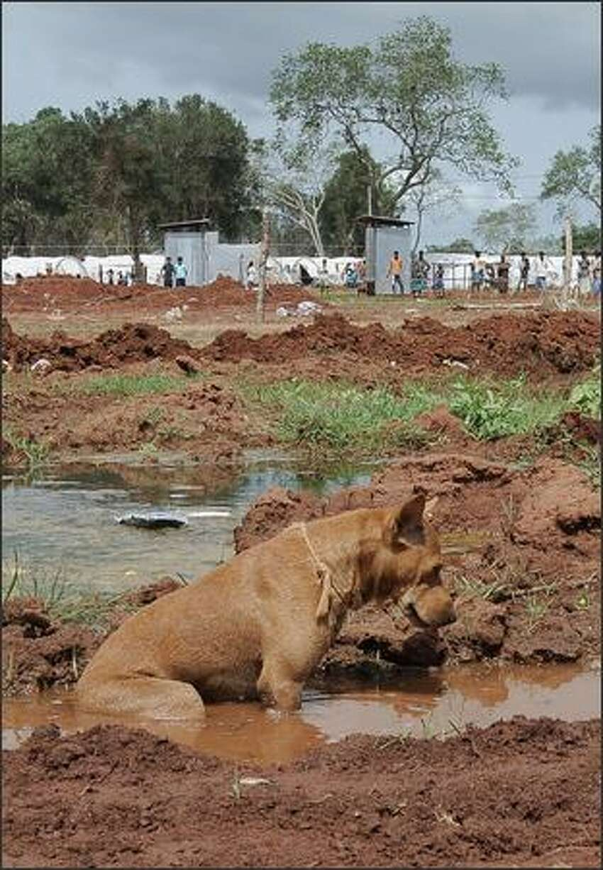 A dog cools off in a puddle of water at the Menik Farm refugee camp in Cheddikulam. UN Secretary-General Ban Ki-moon came face-to-face May 23 with the despair of Sri Lanka's war-hit civilians as he toured the nation's biggest refugee complex, home to 200,000 displaced by fighting.
