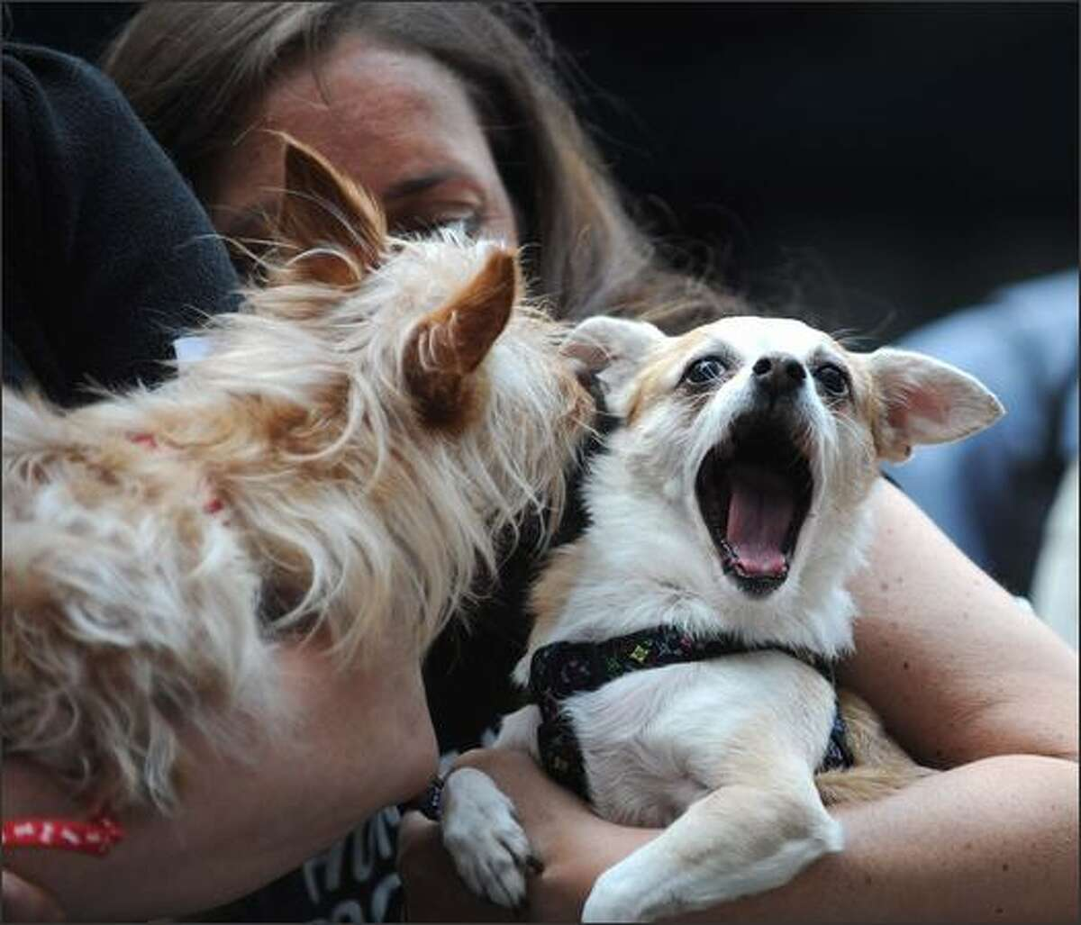 Dogs attend the 100th anniversary of Milk-Bone in Times Square in New York City.
