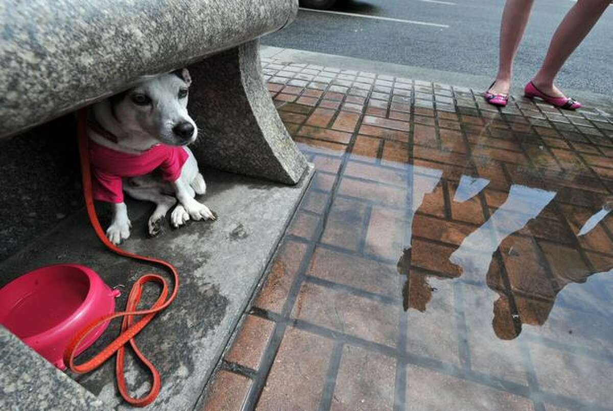 A dog sits under a shelter to protect itself from the rain during a rally organized by Ukrainian Zoo Rights activists in front of the mayor's office in Kiev.