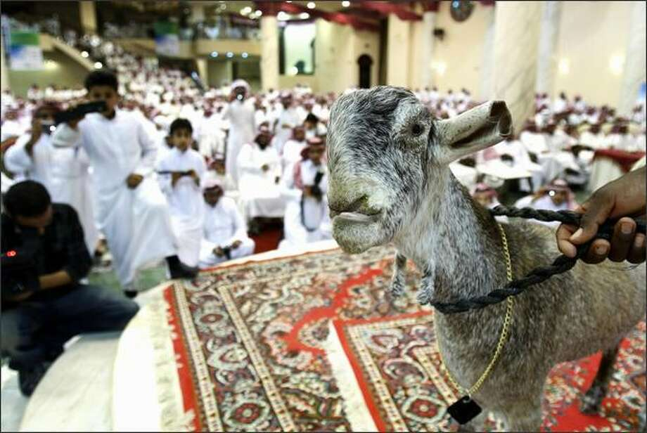 A goat stands in front of attendees during a competition and auction for the best looking and rarest goats in Riyadh. Photo: Getty Images / Getty Images