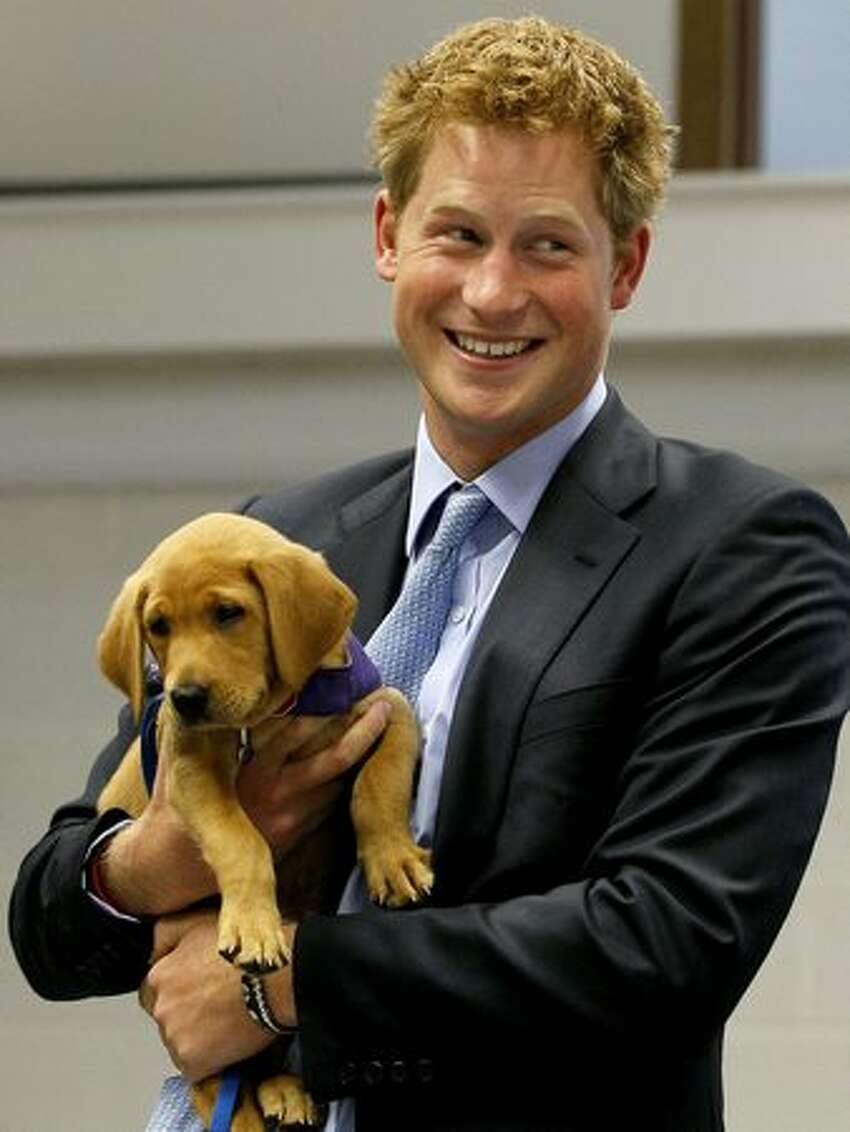 Prince Harry holds an eight week old puppy called Veyron during a visit to the charity Canine Partners Training Centre in Midhurst, United Kingdom.
