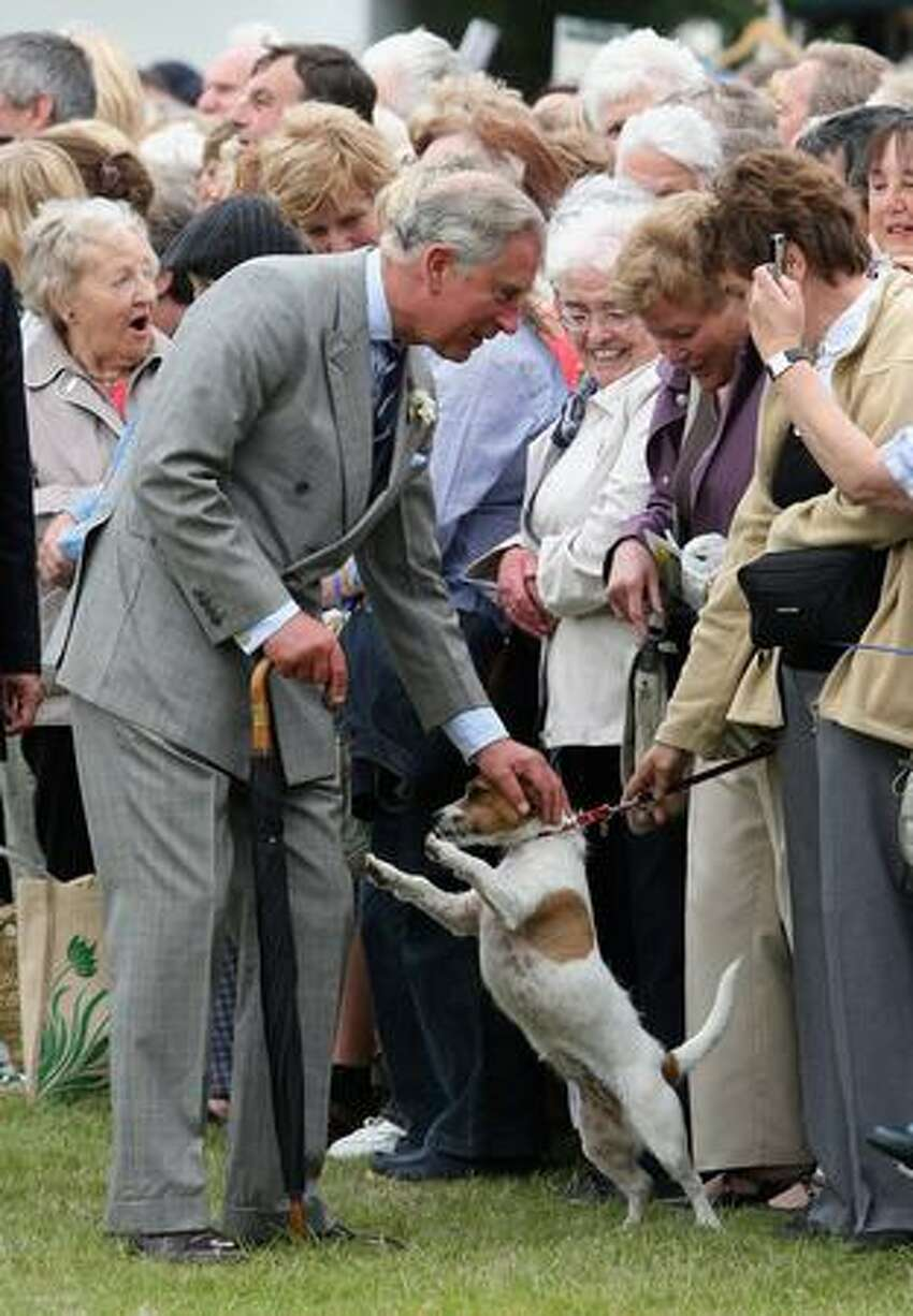 Prince Charles pets Tamzin the dog while meeting people at Sandringham Flower Show in King's Lynn, England.