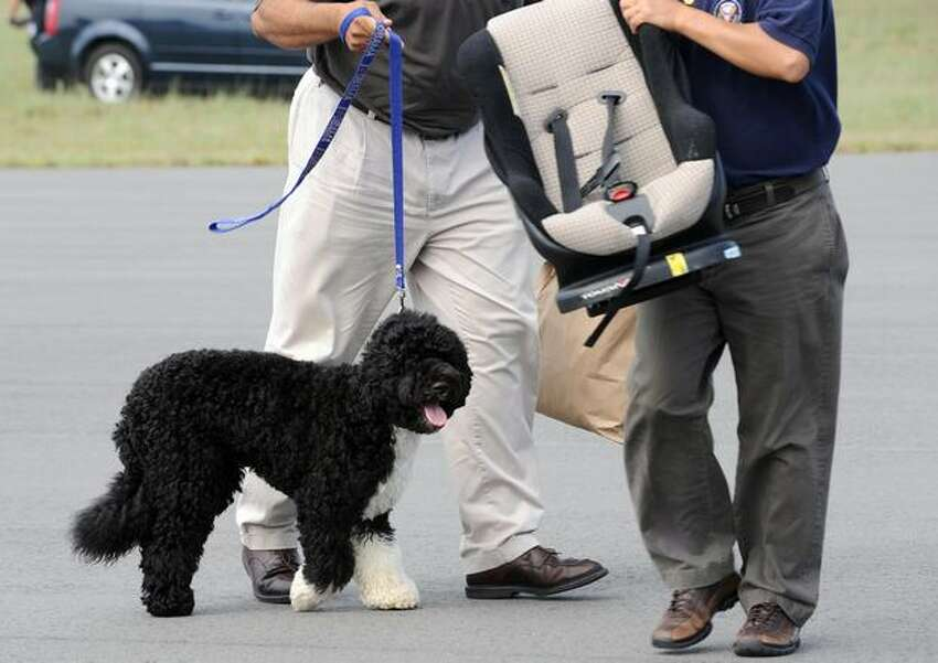 White House staff hold the Obama family dog, Bo, as it arrives at the Cape Cod Coast Guard Air Station on Martha's Vineyard. The First family are on a week-long vacation on the exclusive island of Martha's Vineyard.