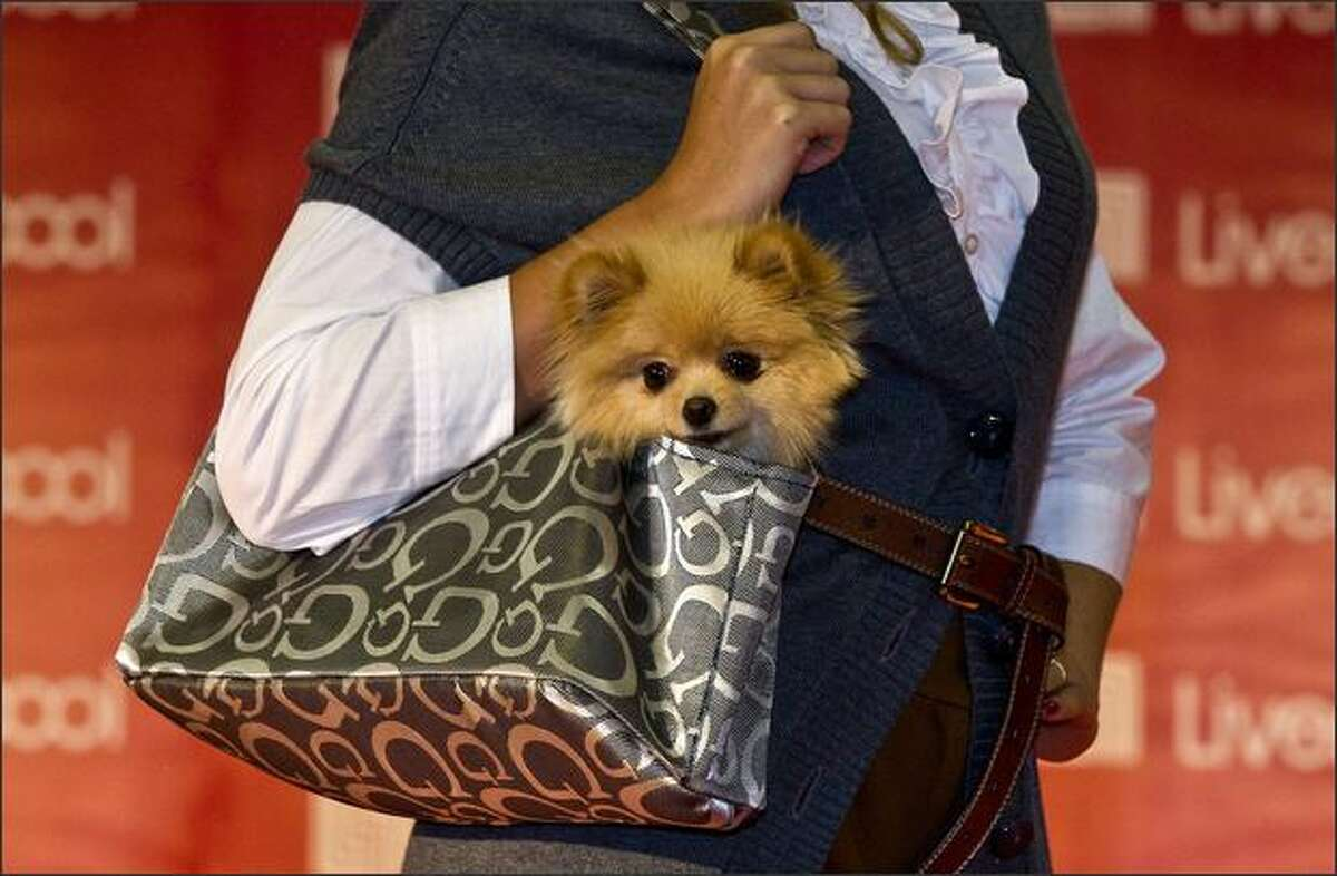 A model displays a bag for carrying dogs, by Gaby, during the Fashion Pets, in Mexico City.