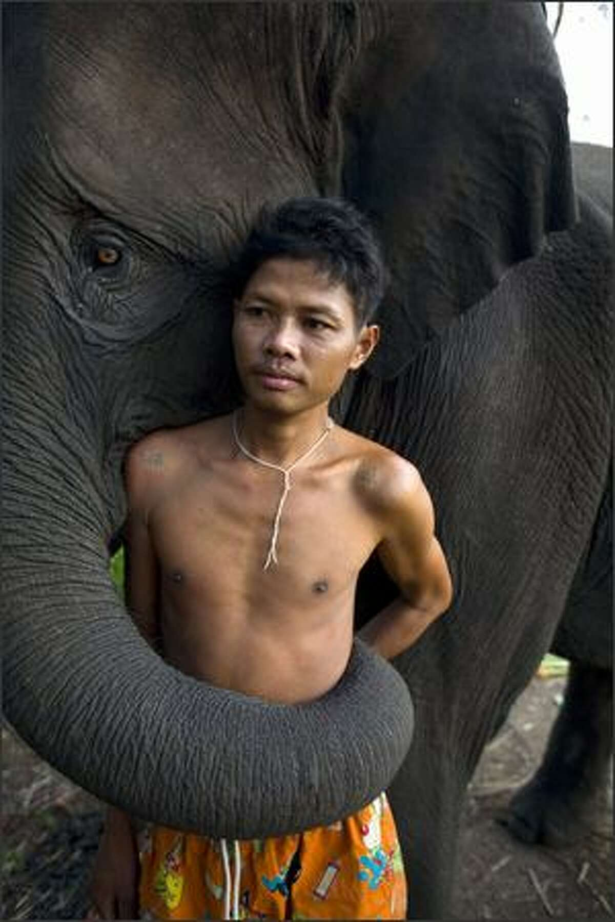 Sangworn, a mahout (elephant driver), stands with his elephant, Bussaba, 13 years old, at his temporary camp in Bangkok, Thailand. While the elephant is a symbol of Thailand, it is a fairly common site to see the unemployed and homeless animals roaming the city streets begging for food. The tame elephants dodge the traffic as their mahouts (elephant drivers) sell sugar cane by the bag to tourists who then feed them. Mahouts say that they have little choice but to bring their elephants to cities like Bangkok and Chiang Mai. Elephants are trained to paint, play musical instruments, and even kick soccer balls.