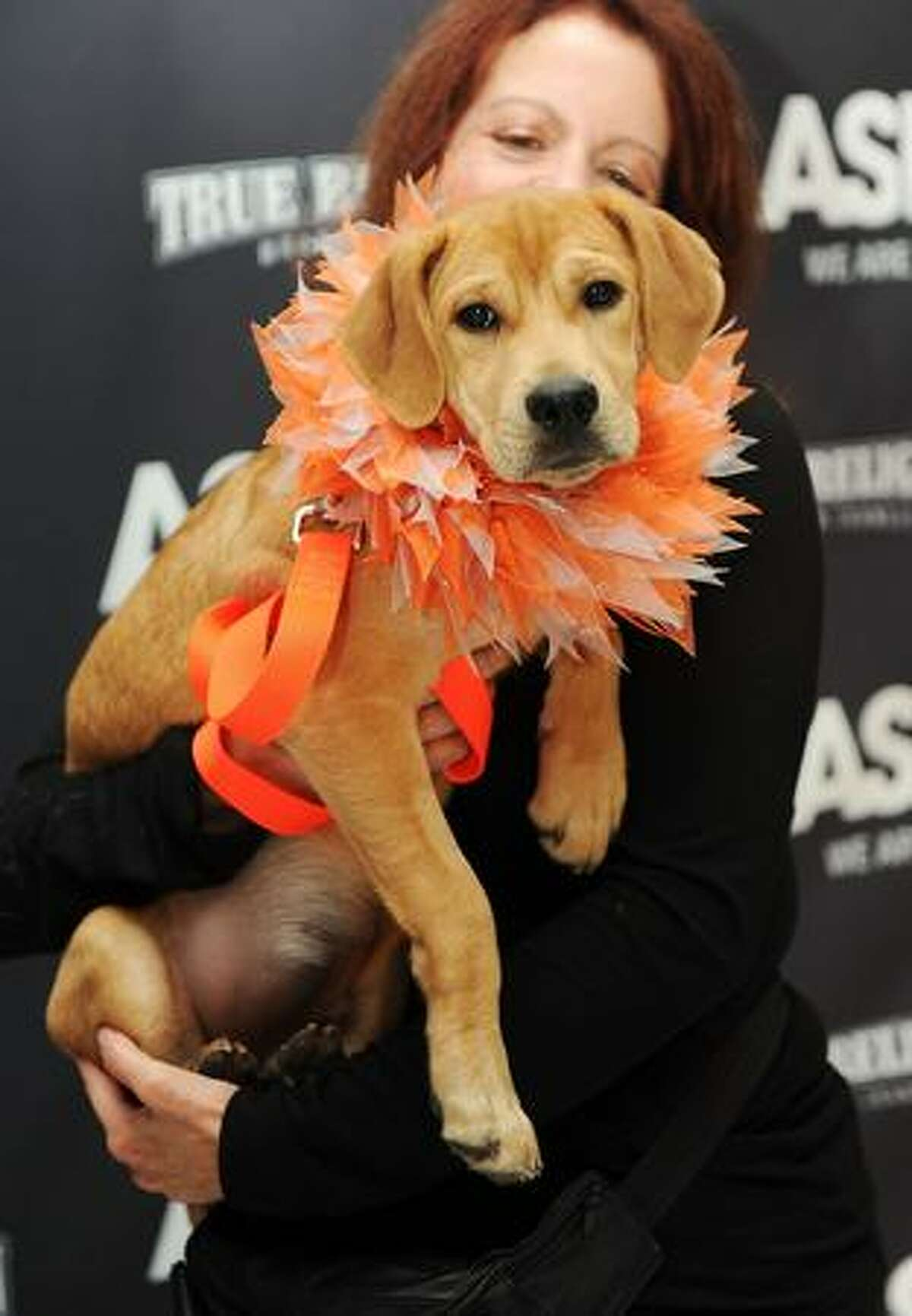 One of the dogs up for adoption at the 2009 ASPCA Young Friends benefit at the IAC Building in New York City.