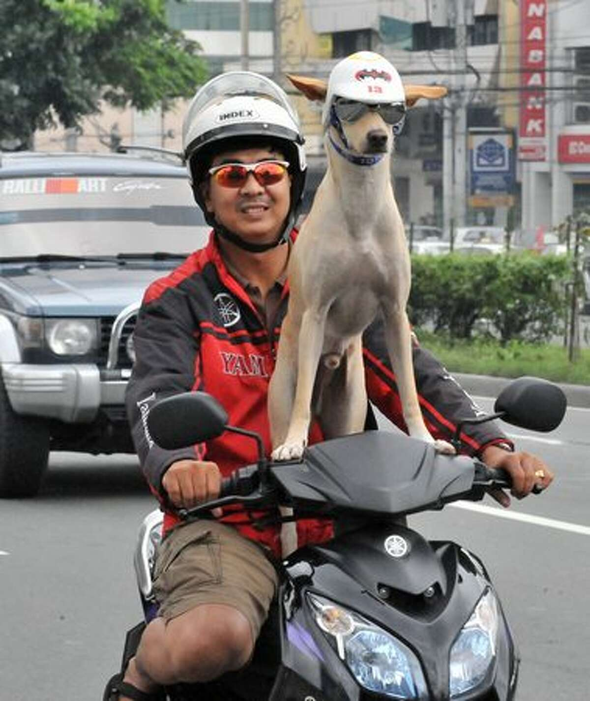 Motorist Gilbert rides on a motorcycle with his pet dog Bogie as they travel on a road in Manila.