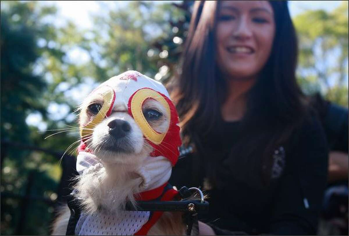 Dog Chico is dressed as a Mexican wrestler during the 18th annual Tompkins Square Halloween Dog Parade in New York City. The event is the largest dog Halloween party in the United States with an annual attendance of over 400 costumed dogs.