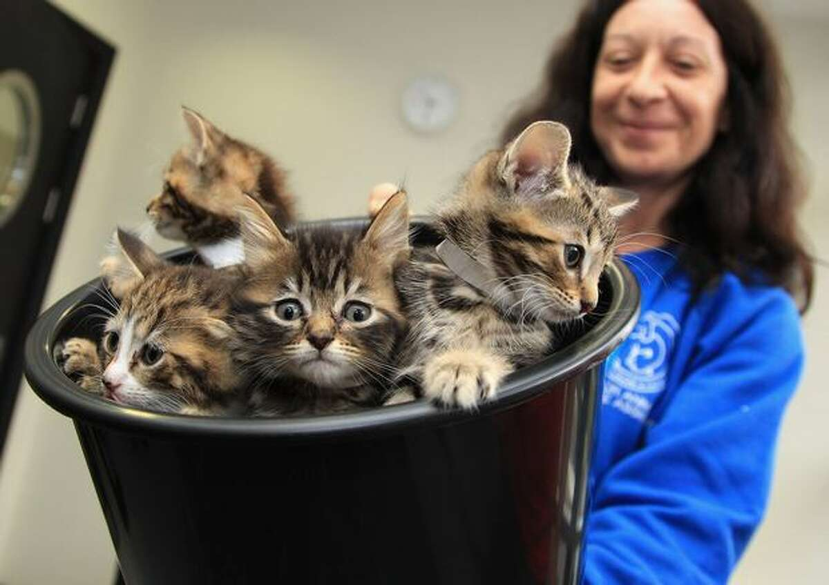 Kittens are seen in a bucket before they meet Camilla, Duchess of Cornwall, as she visits Battersea Dog and Cat's Home in London, England.
