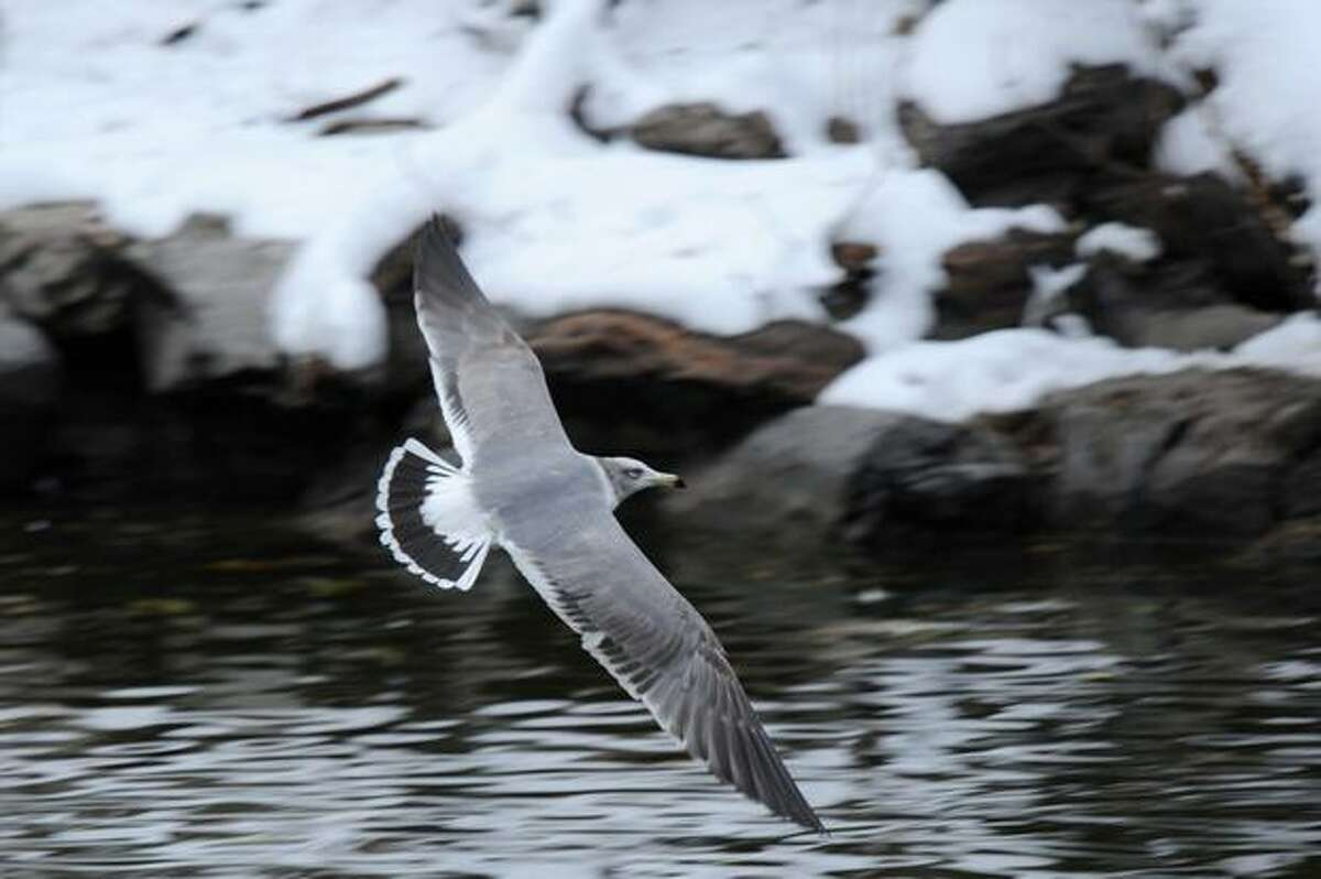 A bird flies over a lake at a zoo after a heavy snowfall in Beijing.
