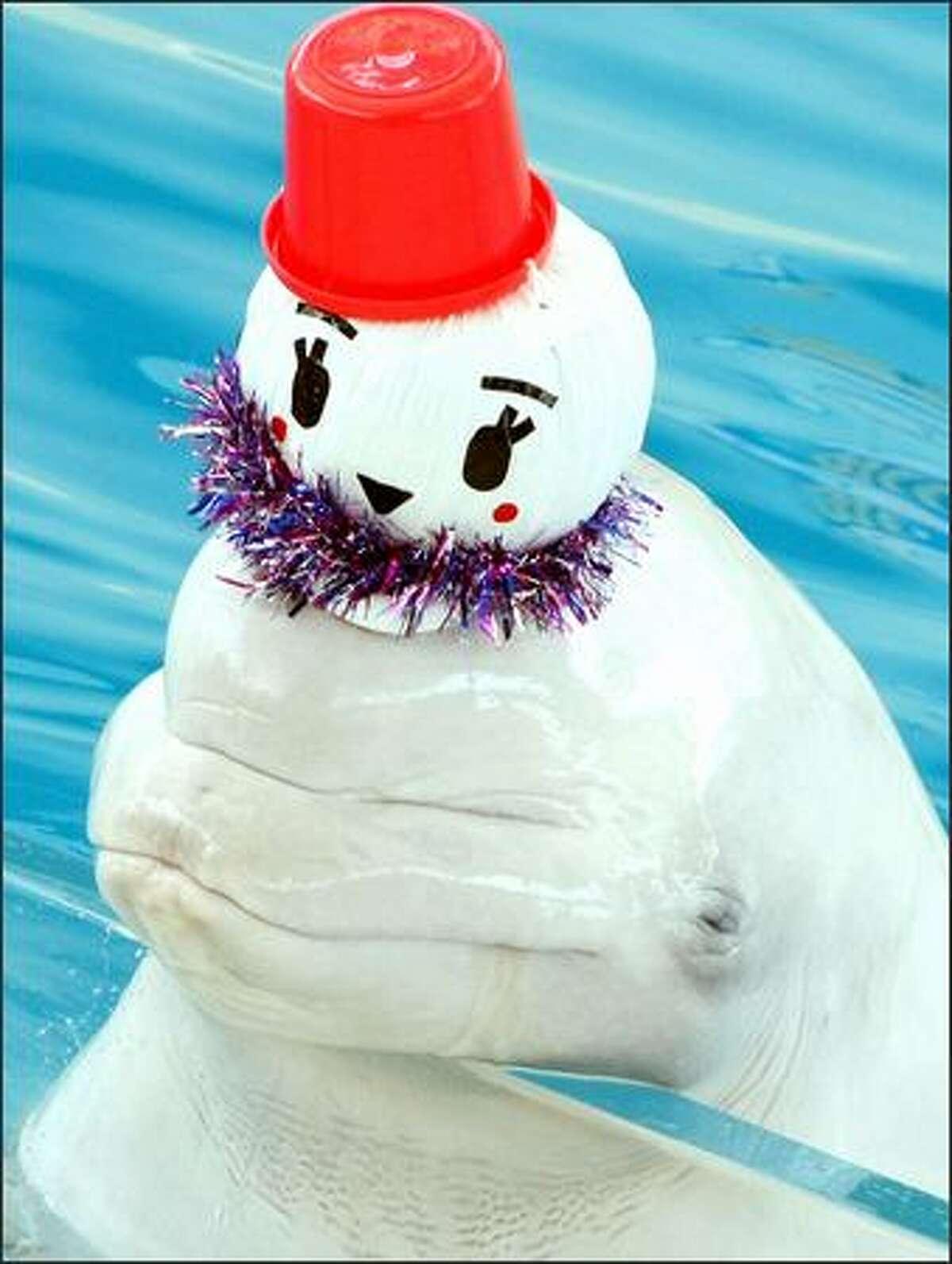 A white Beluga whale wears a snowman themed Christmas hat at Yokohama Hakkeijima Sea Paradise in Yokohama, Kanagawa, Japan.