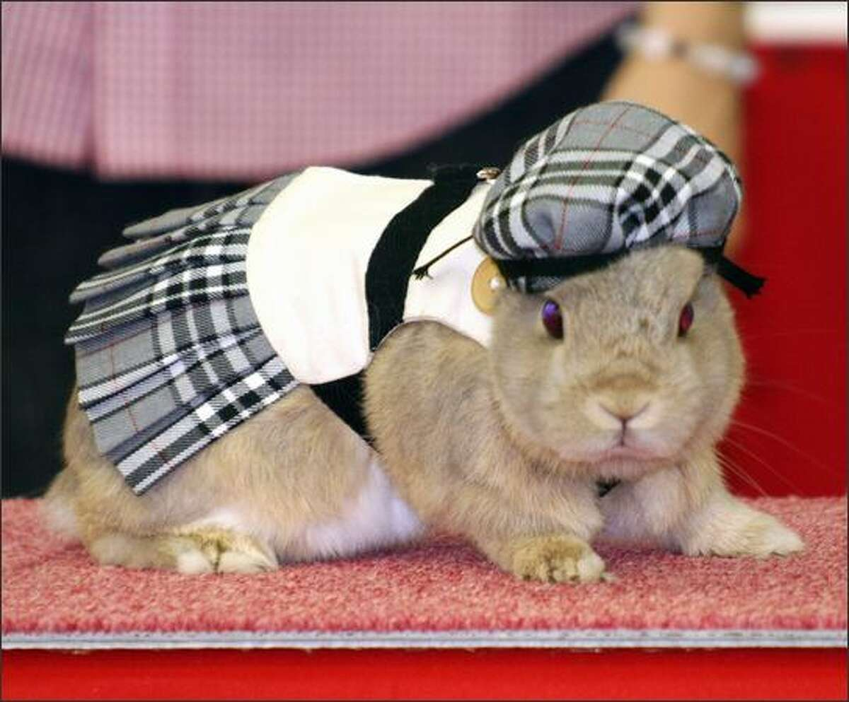 A rabbit displays a tartan dress with a hat during a rabbit fashion contest at the Rabbit Festa in Yokohama city in Kanagawa prefecture, suburban Tokyo. Some 8,000 rabbit lovers visited the annual two-day event.