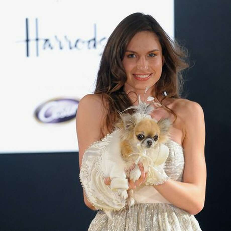 A model walks down the catwalk with a dog wearing an outfit from the movie 'The Wizard of Oz' during the annual 'Pet-a-Porter' pet fashion show at Harrods in London, England. Photo: Getty Images / Getty Images