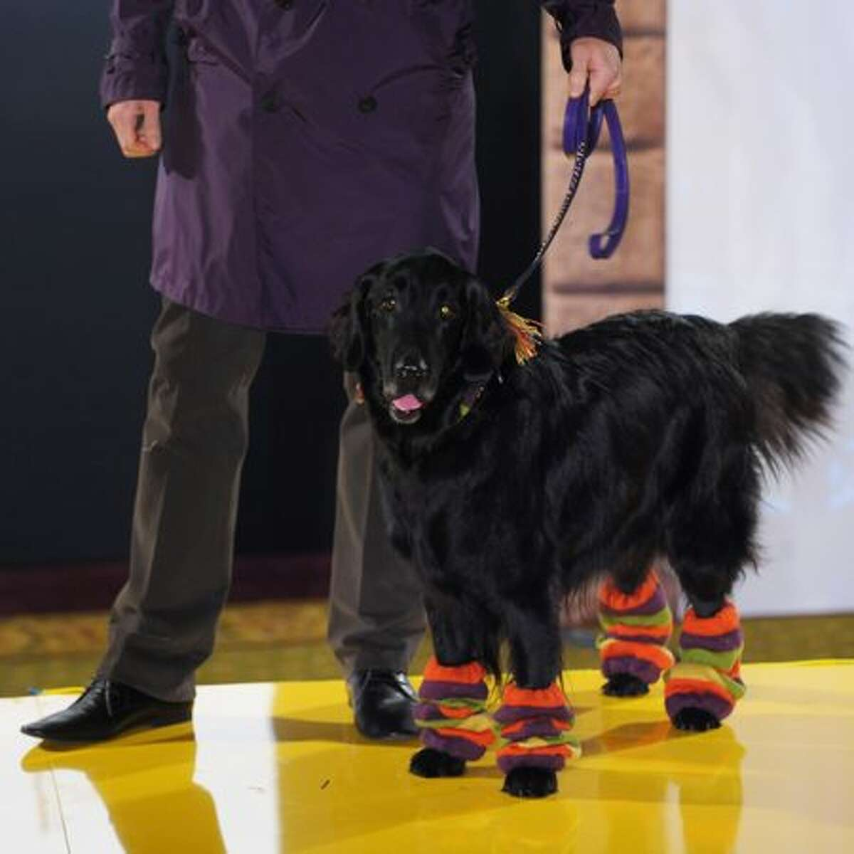 A model walks down the catwalk with a dog during the annual 'Pet-a-Porter' pet fashion show at Harrods in London, England.