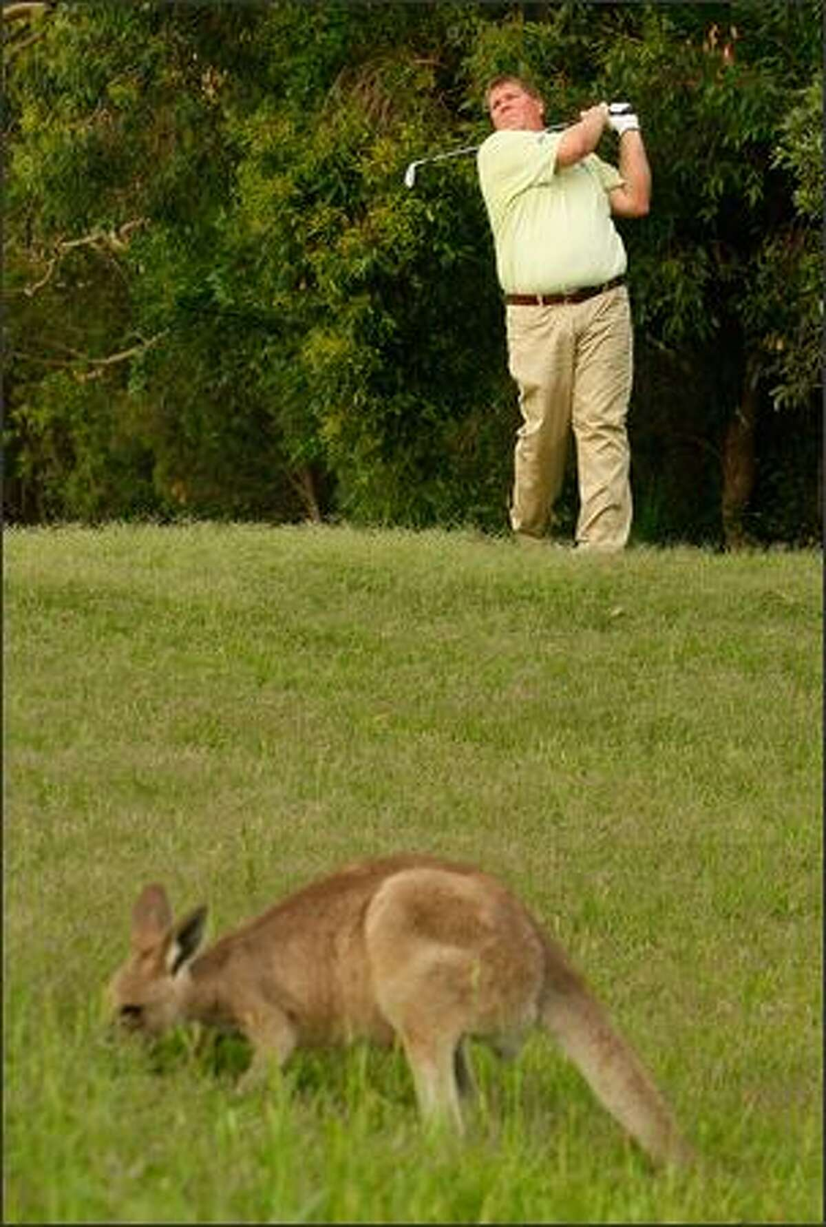 John Daly of the USA plays a shot in front of a kangaroo during day two of the Australian PGA Championship at the Hyatt Regency Resort at Coolum Beach, Australia.
