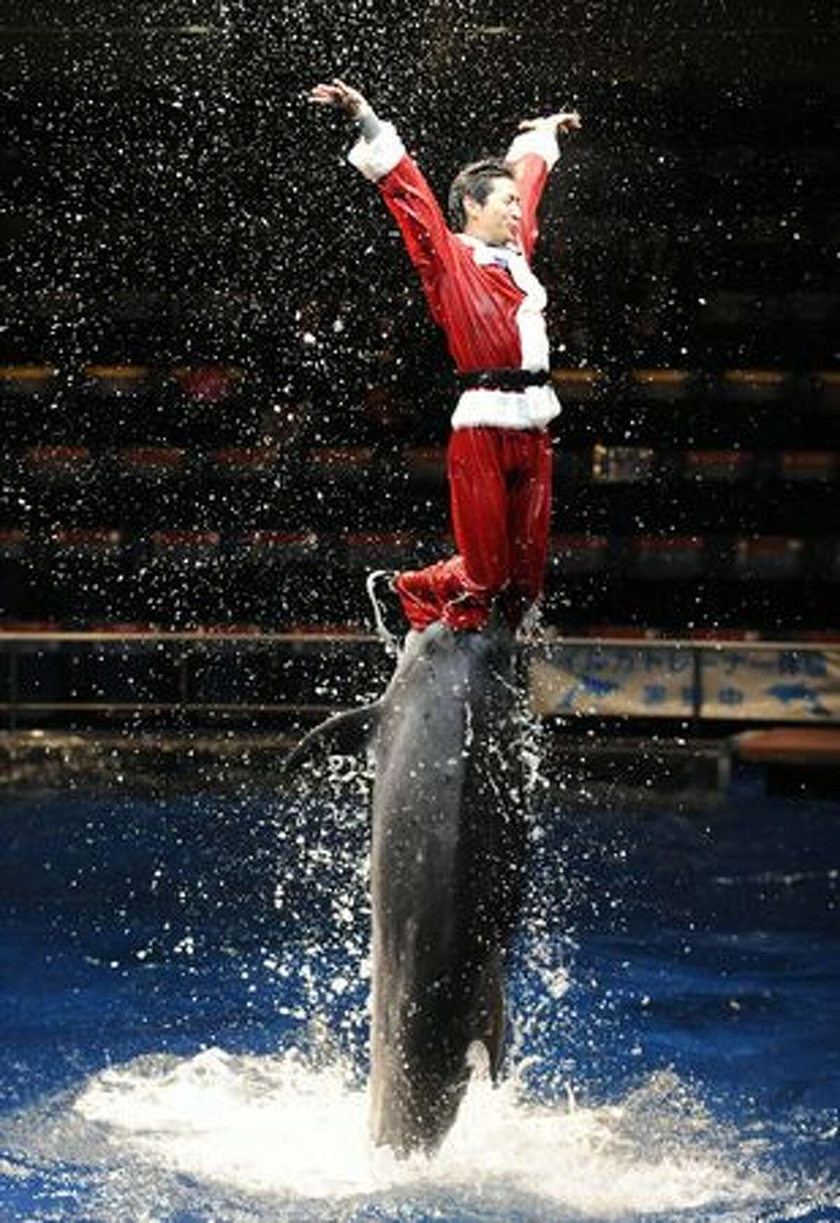 An aquarium trainer in a Santa Claus costume is pushed out of the water by bottle-nose dolphins during a show at the Aqua Stadium aquarium at the Shinagawa Prince Hotel in Tokyo on Monday. Visitors can view the Christmas special show, which will be held through to Christmas Day.