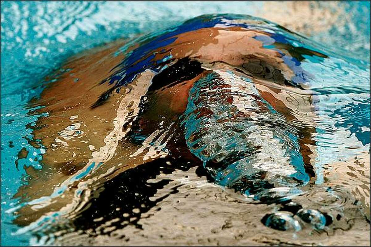 Justin James of Queensland swims in the heats of the Mens 100-meter Individual Medley during day four of the Australian Short Course Championships at the Melbourne Sports & Aquatic Centre on September 23, 2008 in Melbourne, Australia. (Photo by Quinn Rooney/Getty Images)