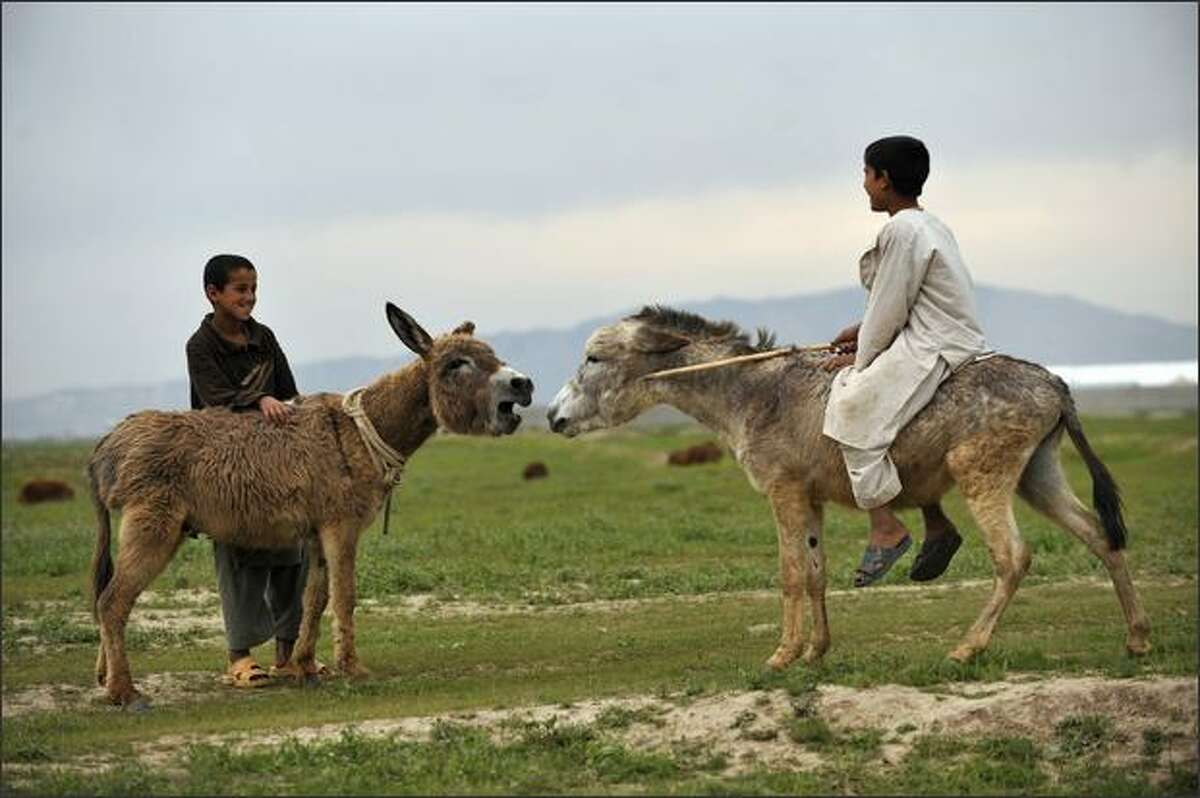 An Afghan boy sits on his donkey before forcing the animals into a fight outside the German armed forces Bundeswehr camp in Kunduz, northern Afghanistan.
