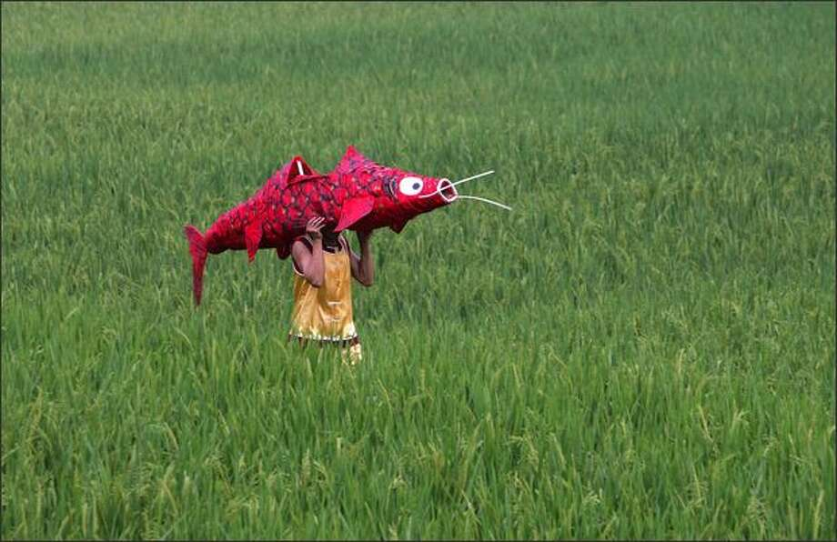 A man carrying a fish decoration walks through a rice field on his way to join other villagers to perform the traditional 'Fishing Waving Hands' dance as part of Sheba Day celebrations at Songnong village in Xiushan Tujia and Miao Autonomous County of Chongqing Municipality, China. Photo: Getty Images / Getty Images
