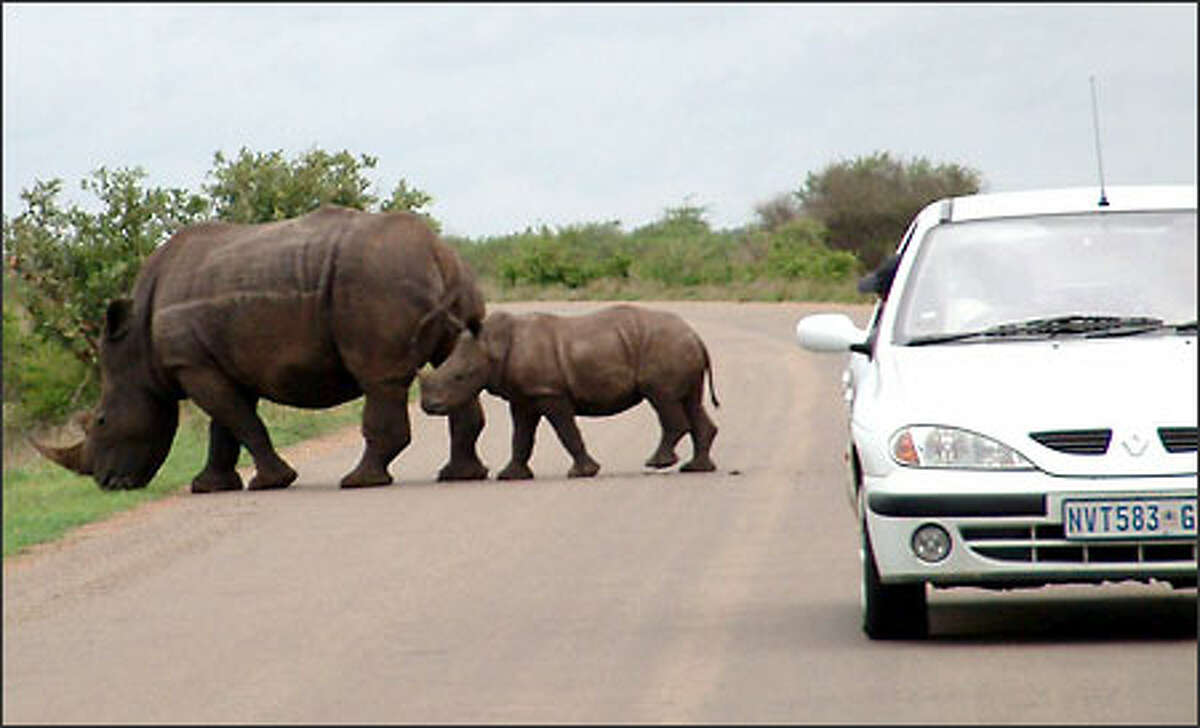 Wildlife enthusiasts flock to South Africa's Kruger National Park in hopes of spotting what's known as