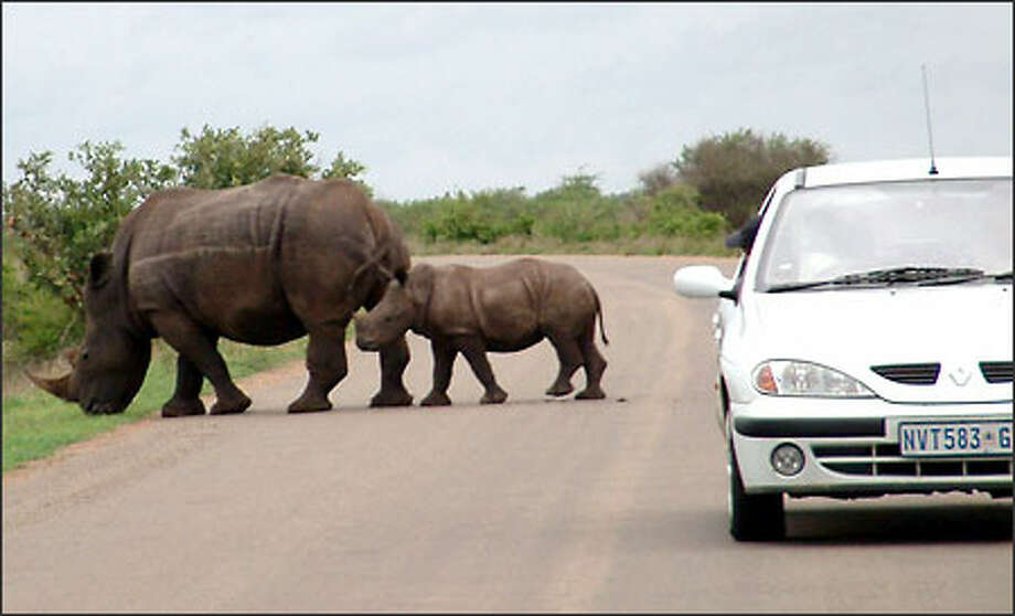"""Wildlife enthusiasts flock to South Africa's Kruger National Park in hopes of spotting what's known as """"The Big Five"""" – rhino, lion, leopard, elephant and buffalo. Here, a mother and baby rhino give visitors a good look. Photo: Richie Costleigh, Special To Seattle Post-Intelligencer / Special to Seattle Post-Intelligencer"""
