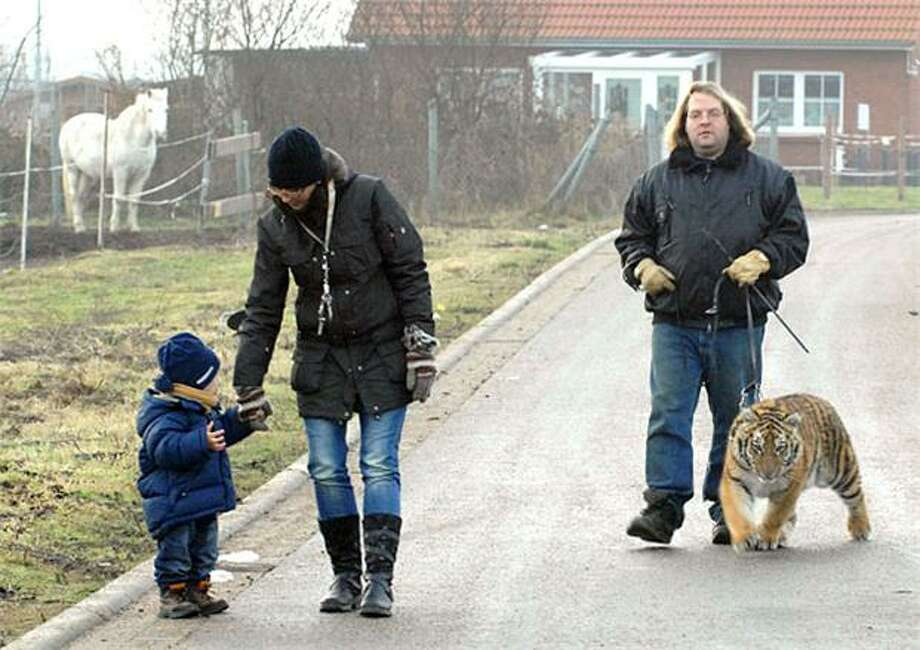 No, you cannot pet the kitty: Animal trainer Sascha Prehn walks Sina in Berkentin, Germany. After residents complained about a major carnivore on the streets, Prehn agreed to take the tiger for walks only in less densely populated areas of the city. Photo: Wolfgang Langenstrassen, AFP / Getty Images / AFP / Getty Images
