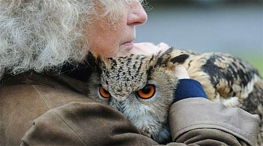 Put. Me. Down. NOW: Funny, our cats give us the exact same look when we hold them. (Mathilde Deckers cuddles her owl in Dormund, Germany.) Photo: Julian Stratenschulte, AFP / Getty Images / AFP / Getty Images