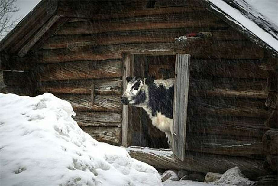 Cabin fever: That feeling you're starting to get right about now. The DARE people note that this term has become widespread. Photo: Fredrik Persson, AFP / Getty Images / AFP / Getty Images