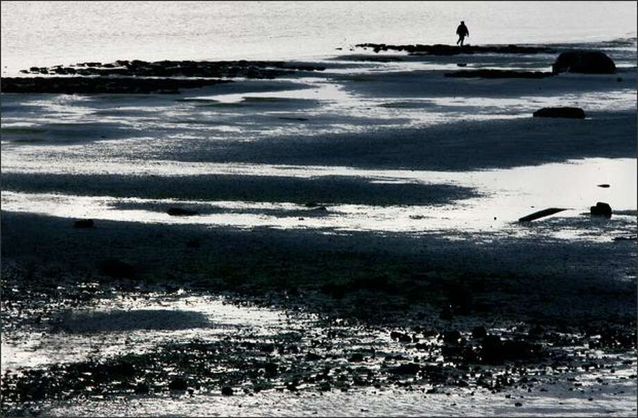 A person explores the tidal flats near Termination Point on the northside of the Hood Canal Bridge on the Olympic Pennisula. Photo: Dan DeLong, Seattle Post-Intelligencer / Seattle Post-Intelligencer