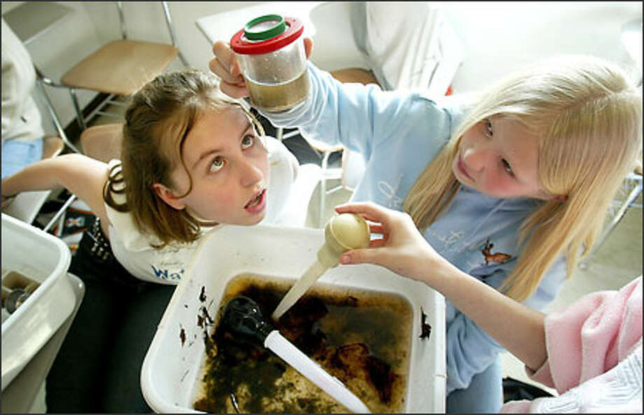Fifth-grader Emily Bohnen, left, of Fruitland Elementary in Puyallup takes a close look at a leech found by classmate Haley Poppleton, right, during a presentation at Water4Life, the Tacoma-Pierce County Children's Water Festival at the University of Puget Sound in Tacoma. The pupils were counting macroinvertebrates in water taken from Spanaway Creek and using the count to determine the health of the stream. Photo: Dan DeLong, Seattle Post-Intelligencer / Seattle Post-Intelligencer