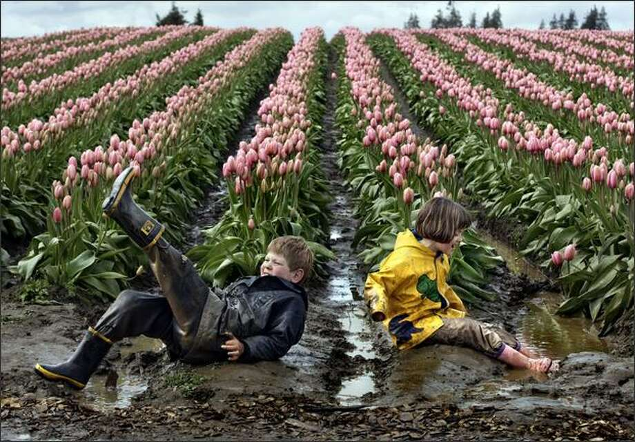"Alex Fritch, 7, and his sister Ana, 8, of Snohomish, Wash. empty the water from their boots after splashing in the puddles near the Pink Impression tulips at Tulip Town during the Skagit Valley Tulip Festival. ""The flowers are incidental. The mud and the puddles are far more interesting,"" say their mother, who has brought the siblings there the past five years. The kids have come to enjoy playing in the puddles so much, that the family times its visits for after a rain, bringing multiple changes of clothes. This was change number two on the day. The festival runs through April 30. The tulips have been about a week late to bloom due to cold weather, but Tulip Town owner Jeannette Degoede expects to see the number of flowers showing color to double within just the next couple of days, and the weekend to be a sea of color. Photo: Andy Rogers, Seattle Post-Intelligencer / Seattle Post-Intelligencer"